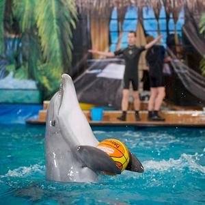 Дельфинарии, океанариумы Абинска