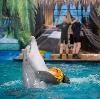 Дельфинарии, океанариумы в Абинске