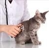 Ветеринарные клиники в Абинске